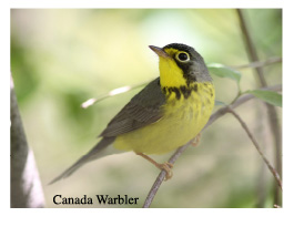 BI Birding Trail Warblers on the Water Events @ Beaver Island Community Center | Beaver Island | Michigan | United States